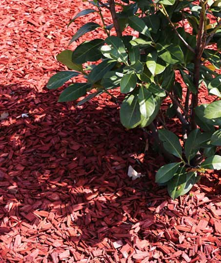 Tom's Picture Perfect Landscape Residential Mulching